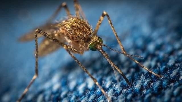 mosquito repellent bands